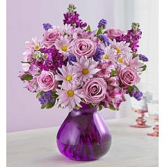 Lavender Dreams - Premium