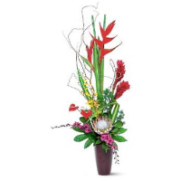 Exotic Protea, Orchids & Haleconia