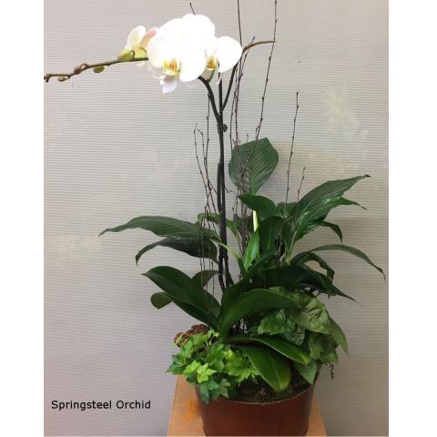 Springsteel Orchid Garden