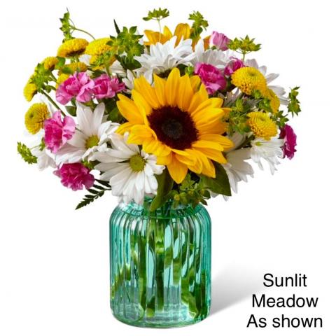 Sunlit meadows