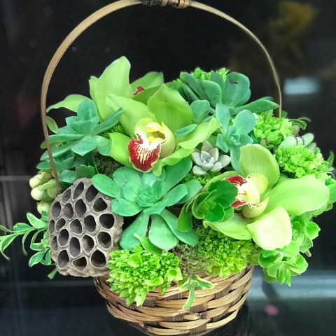 Succulent and Orchid Basket