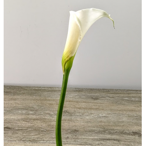 Calla Lily Large White