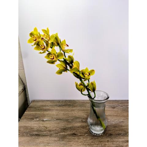Cymbidium Bloom Large