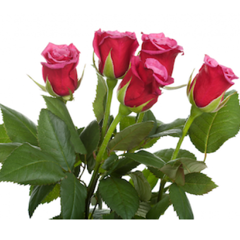 Special Order Roses