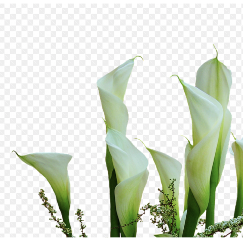 Callas Mini White