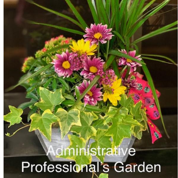 Admin Professional Garden