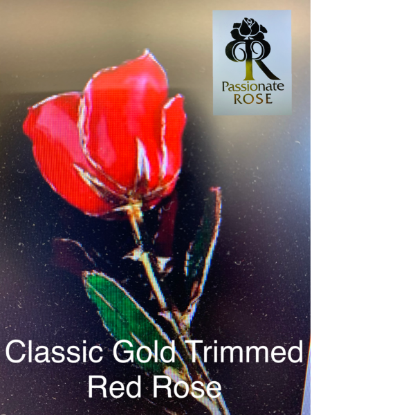Classic Red Gold Trimmed Rose