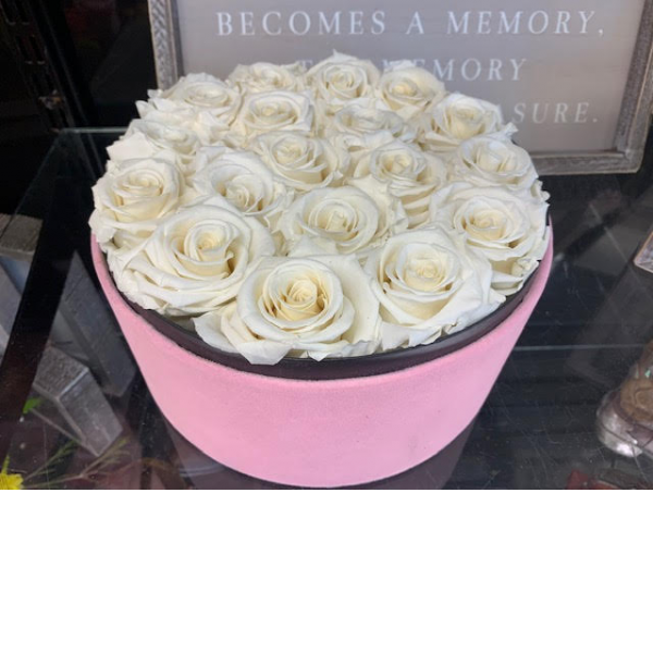 MyPoetry™ pink velvet white rose