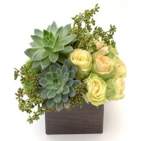 Succulent and Blooms