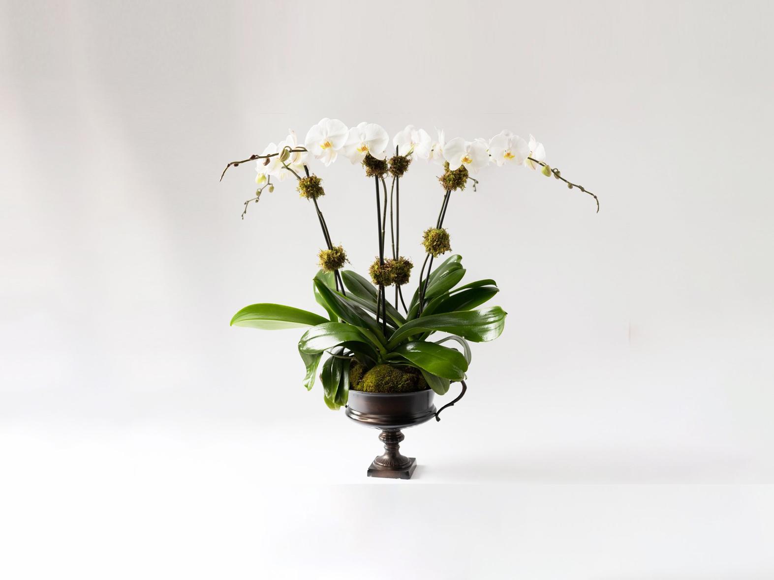 Élan Signature Orchid Arrangement