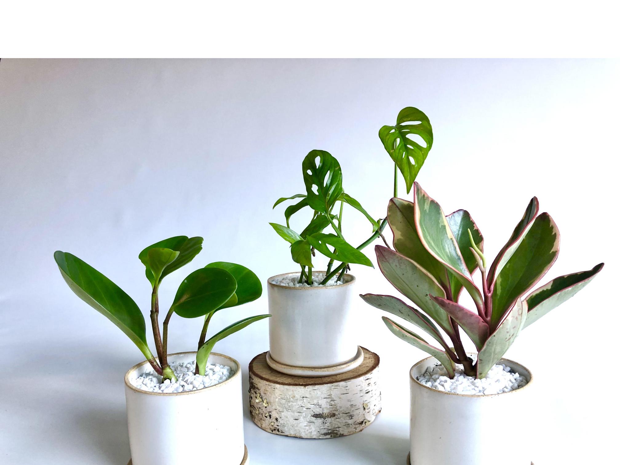 Mini Green Trio