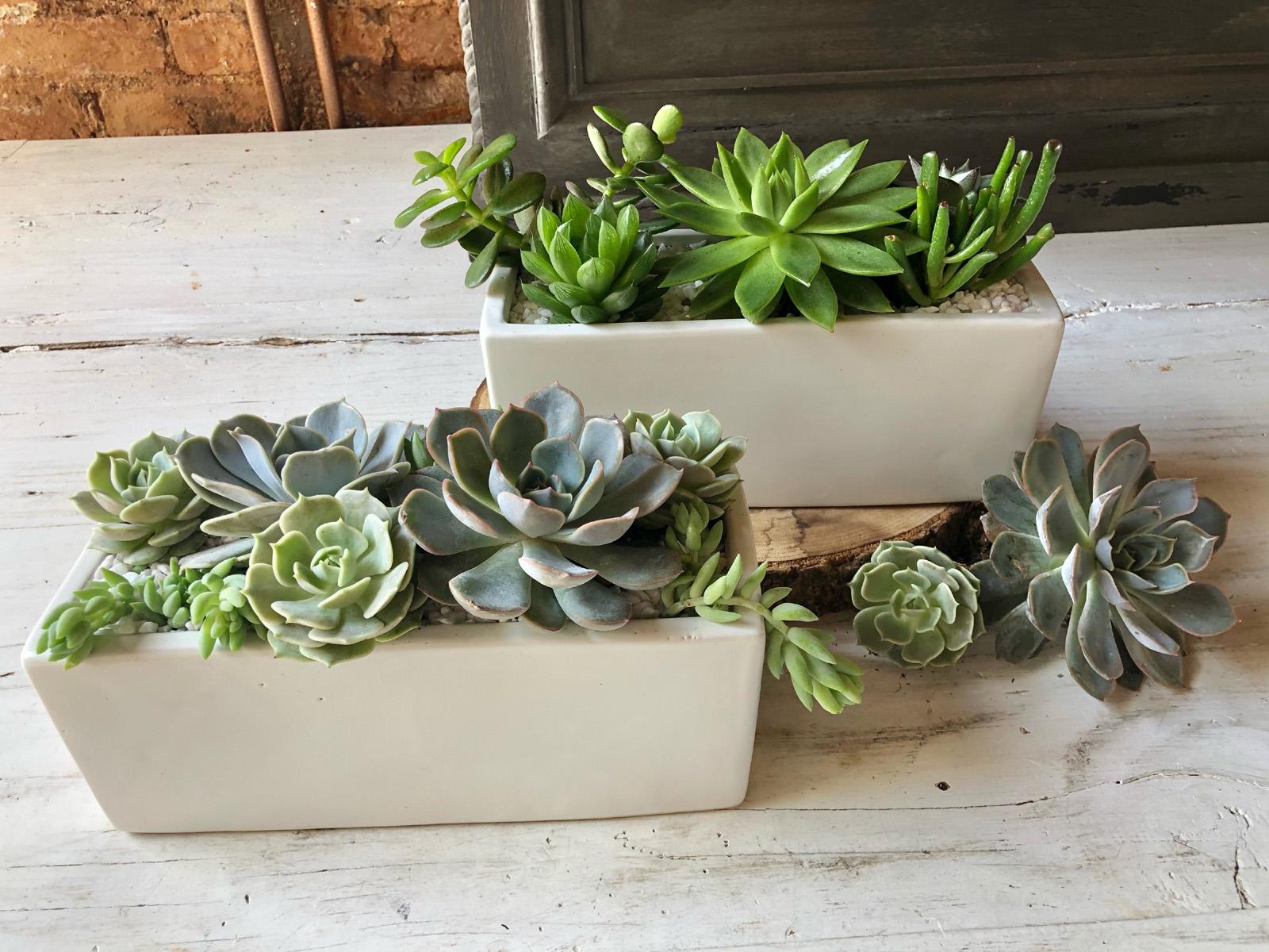 Succulent Garden - Rectangle