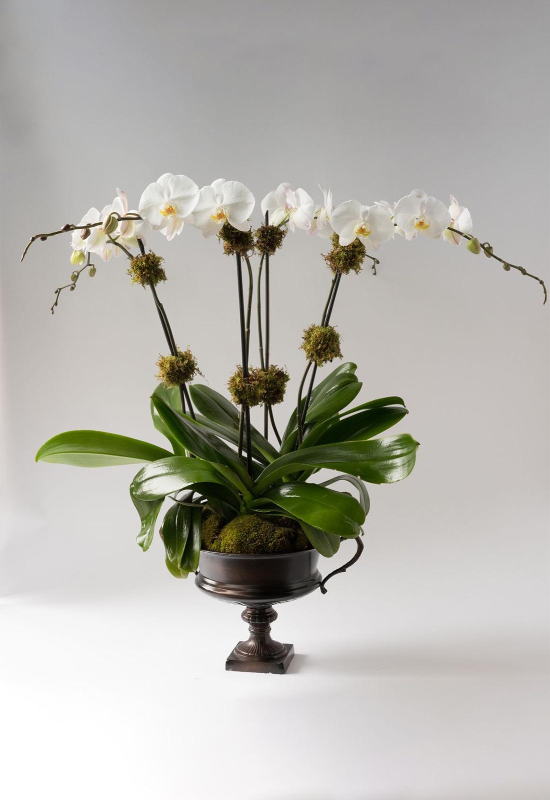 Élan Signature Orchid Arrangement Alternative Image