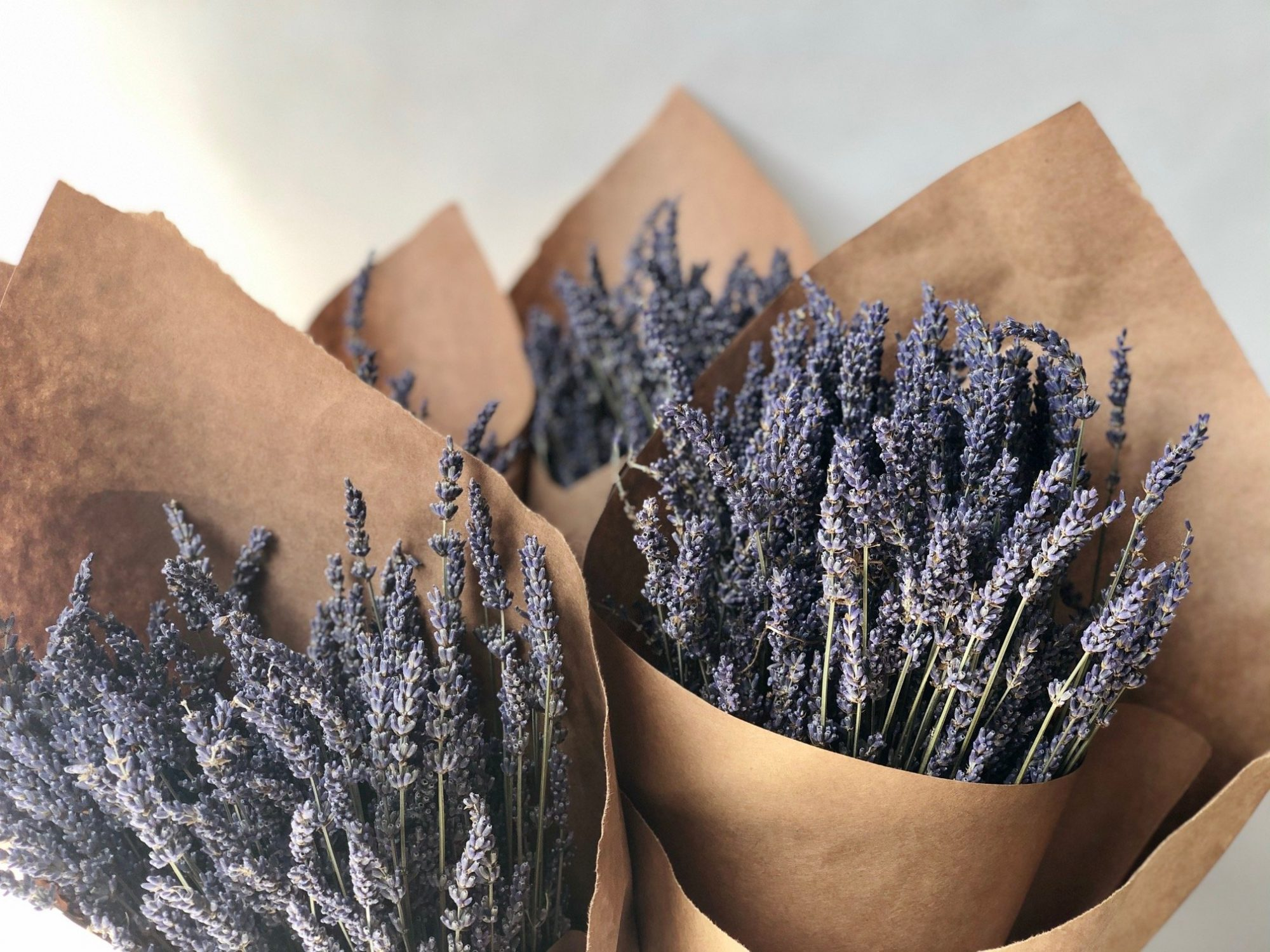Dried Lavender from the South of France