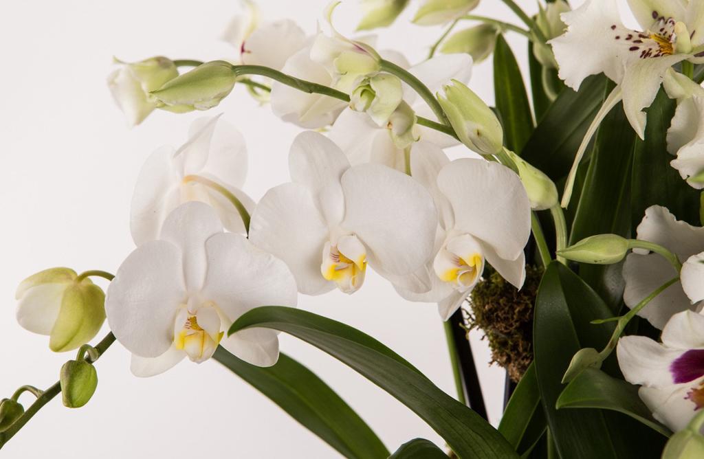 Garden of Orchids Alternative Image