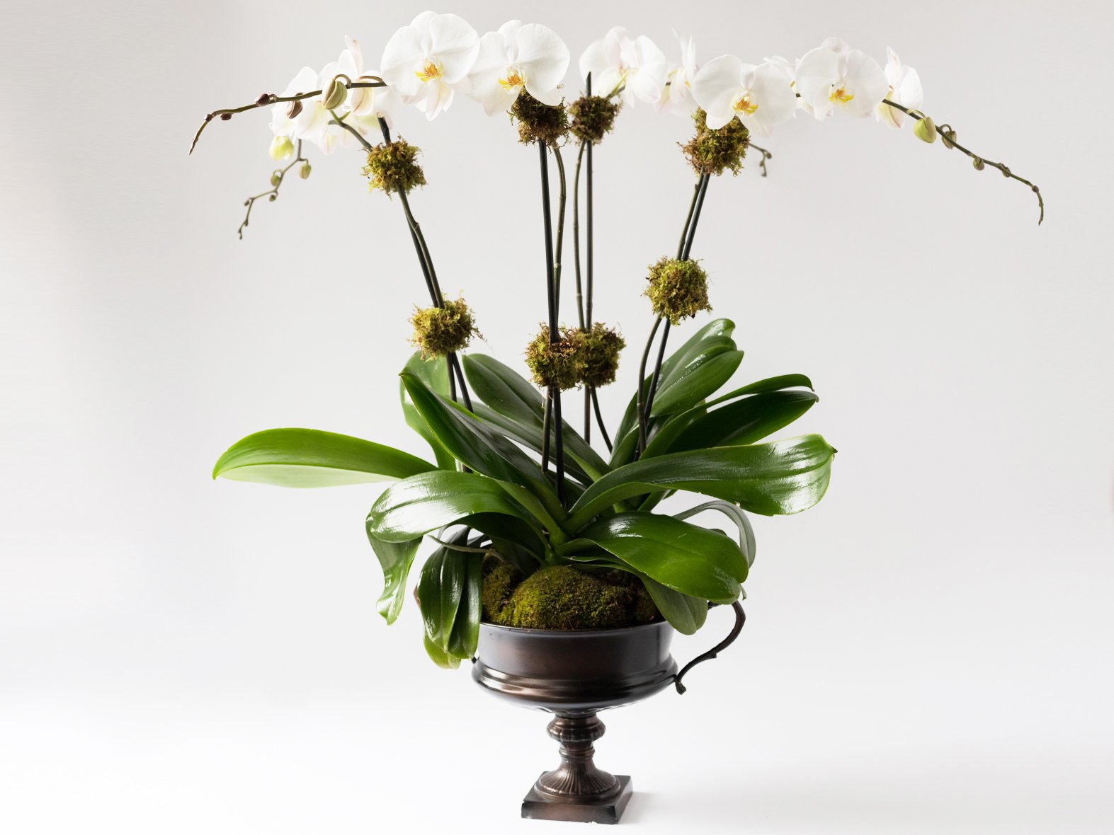 Élan Signature Orchid Arrangement