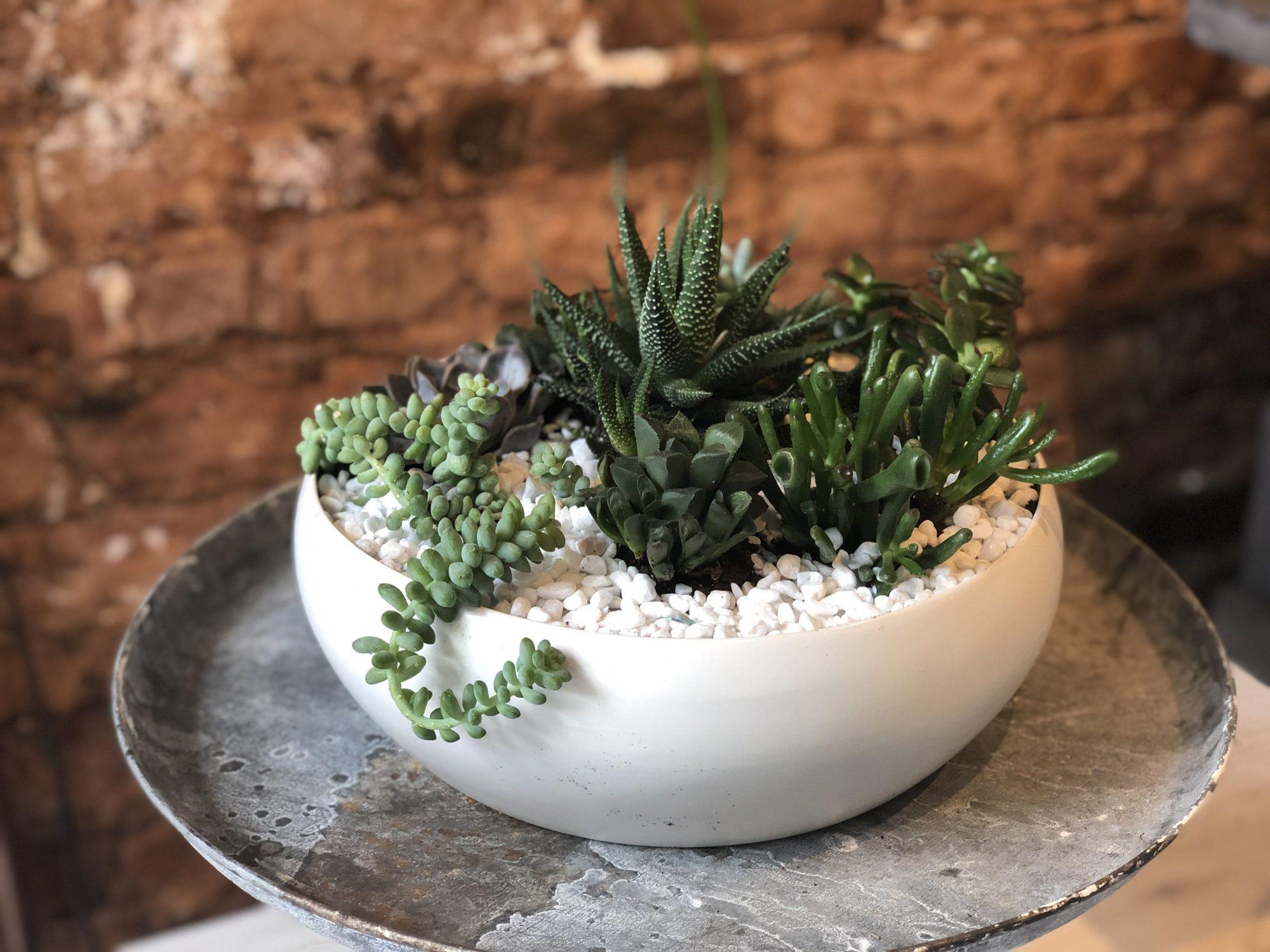 Succulent Garden - Round