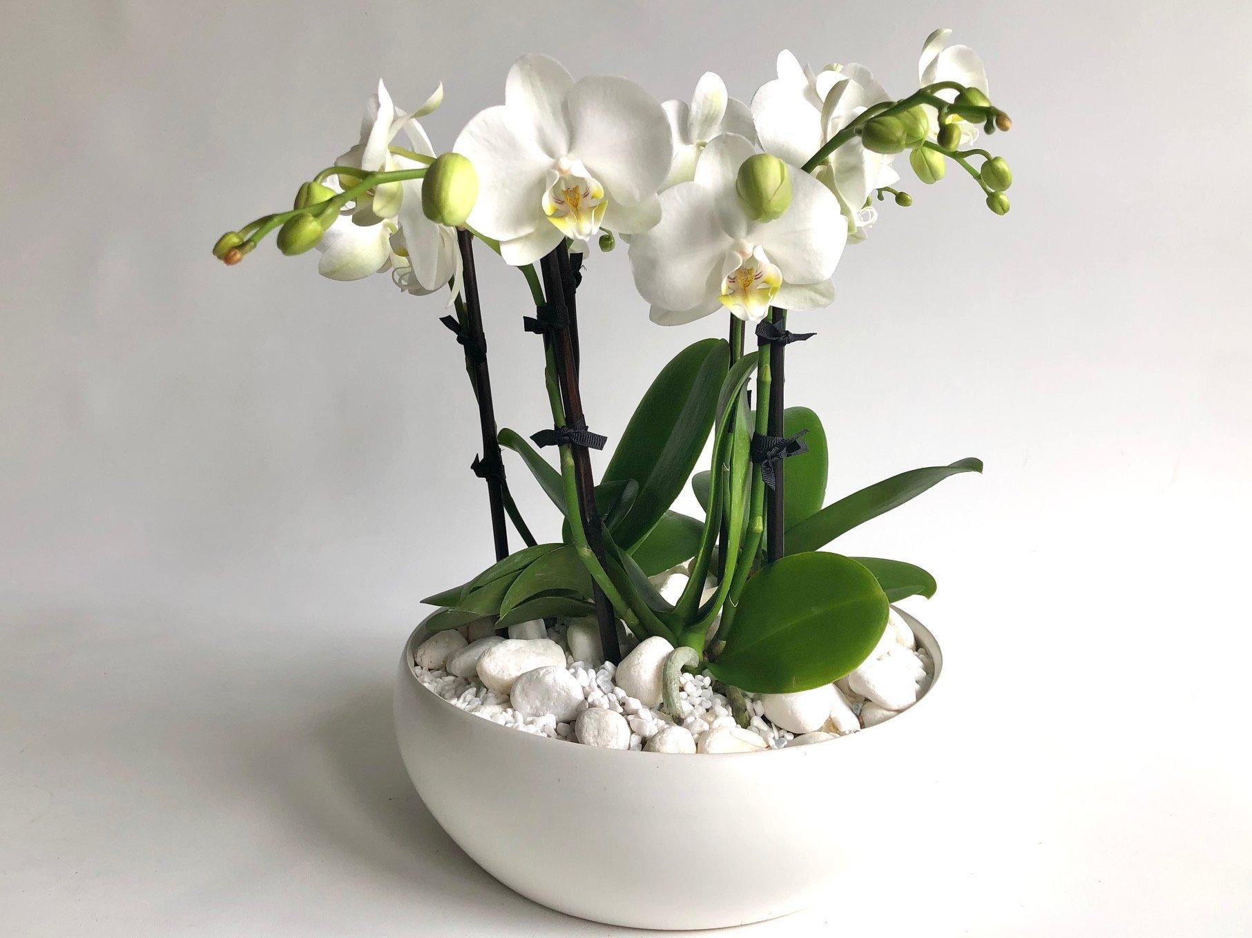 Mini Orchid Garden