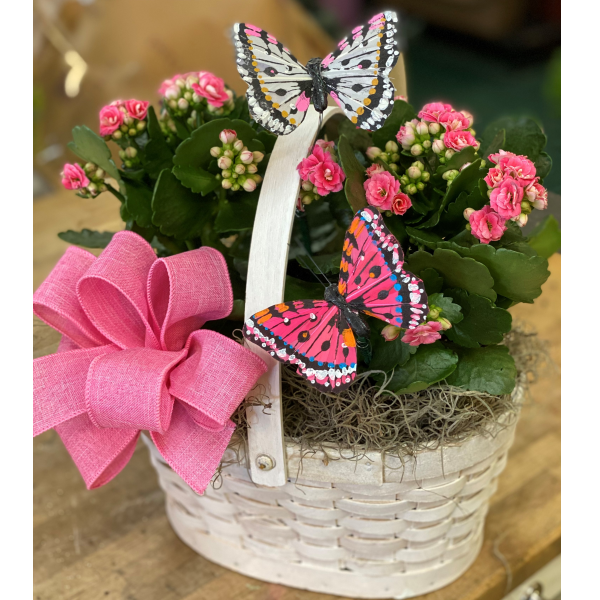 Blooms And Butterflies