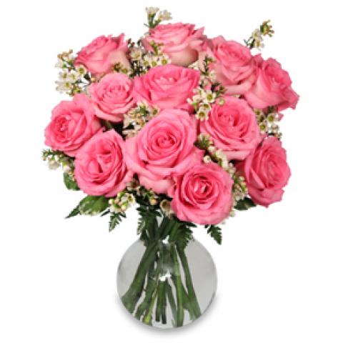 FSN Chantilly Pink Roses
