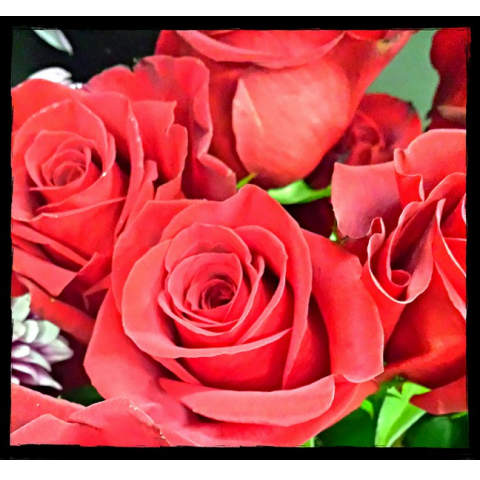 Jacques Flower Shop - Manchester JAC Red Roses
