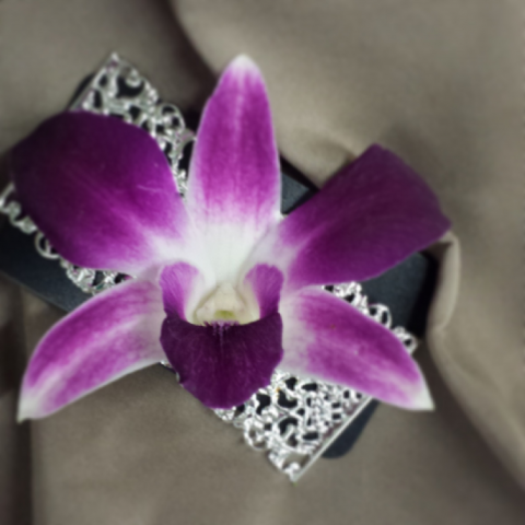 Jacques Flower Shop - Manchester JQP Dendrobium on Magnet