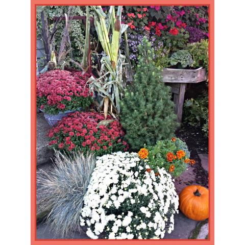 Jacques Flower Shop - Manchester JQ Autumn in the Garden Center