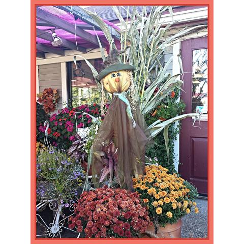 Jacques Flower Shop - Manchester JQ Autumn Welcome