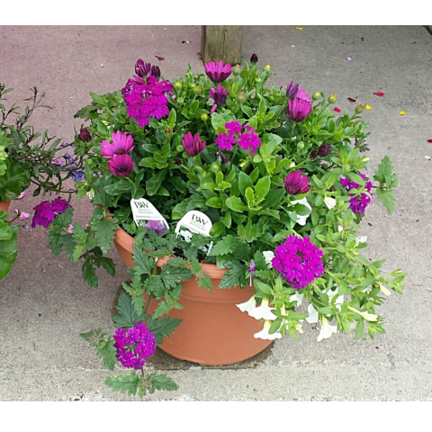 Jacques Flower Shop - Manchester JGC Mixed Patio Planter