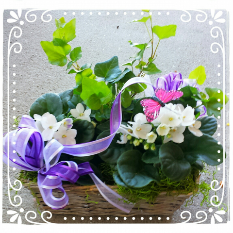 Jacques Flower Shop - Manchester JQM Violets & Ivy Basket
