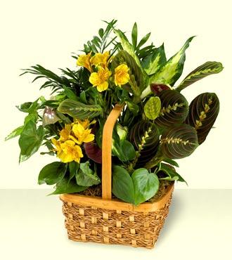 Jacques Flower Shop - Manchester FTD A Bit Of Sunshine Basket