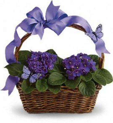 Jacques Flower Shop - Manchester JAC African Violet Basket