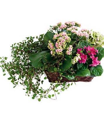 Jacques Flower Shop - Manchester JQ 7132 Circle of Life Plant Basket