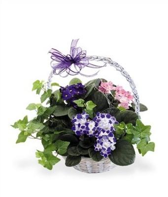 Jacques Flower Shop - Manchester JQ Violet and Ivy Basket