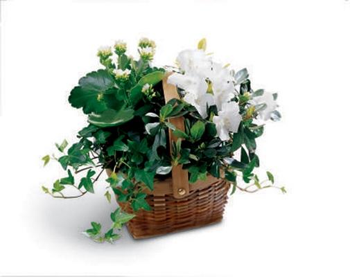 Jacques Flower Shop - Manchester White Assortment Basket