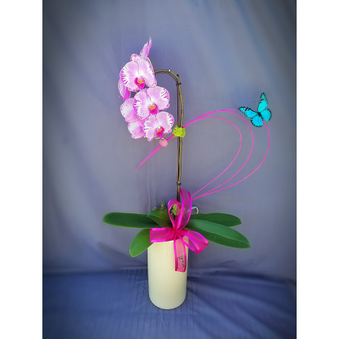 STYLISH ORCHID PLANT