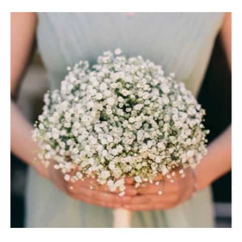 GYPSOPHILIA CLUTCH