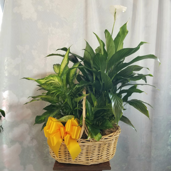 Abundant Peace Basket Garden