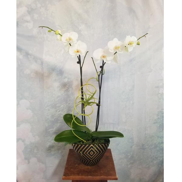 Orchid, Tillandsia Sculpture