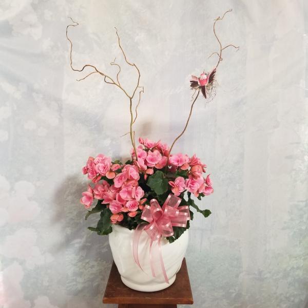 Begonia in Ceramic