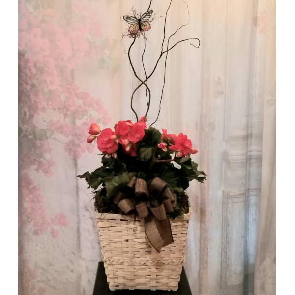 Begonia in a Basket