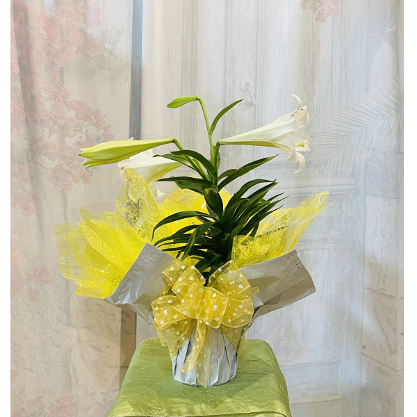Easter Lily Wrapped