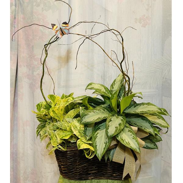 Double Green Plant Basket Garden
