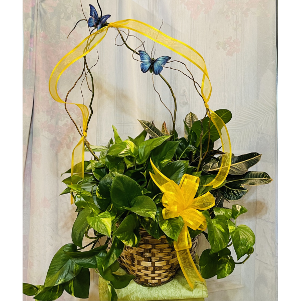 Triple Green Plant Basket