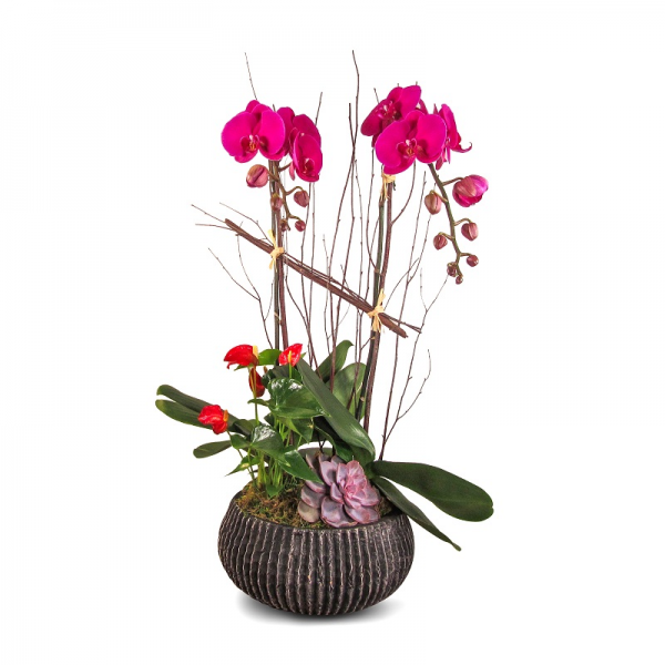 The Valentine Orchid Garden