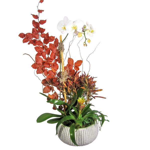Autumn Orchid Garden