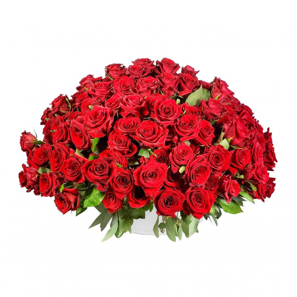 350 Luxurious Roses
