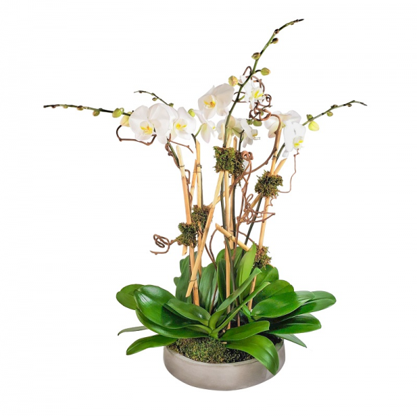 5 Orchids in the Round