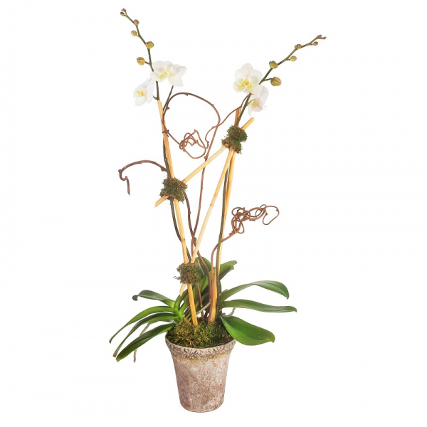 Rustic Double Orchid