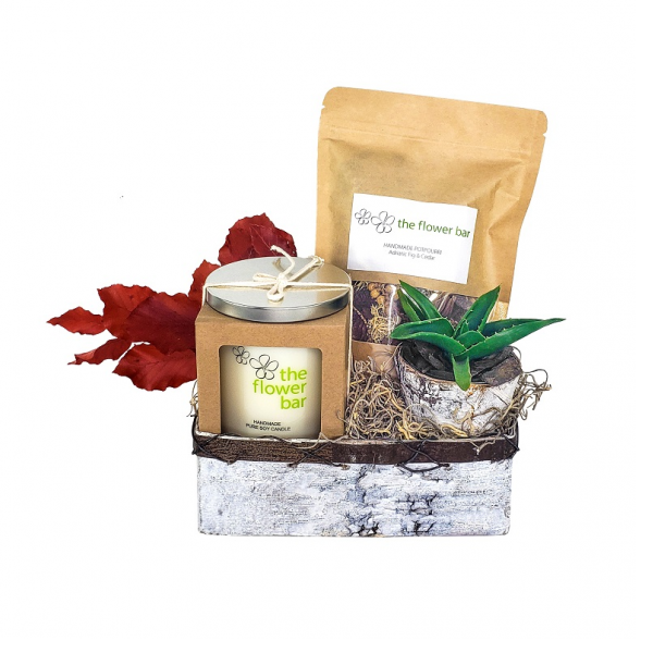 Fall Birch Gift Set with Succulent